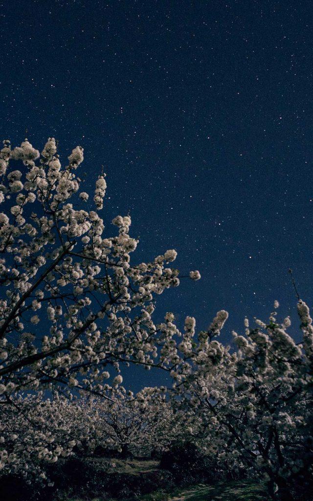 cerezo-en-flor-jerte-buenas-noches