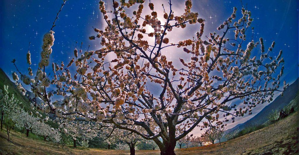 cerezo-en-flor-turismo-extremadura-jerte-buenas-noches