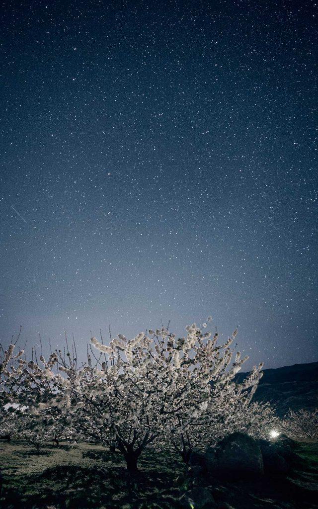 el-cerezo-en-flor-valle-jerte-extremadura-buenas-noches